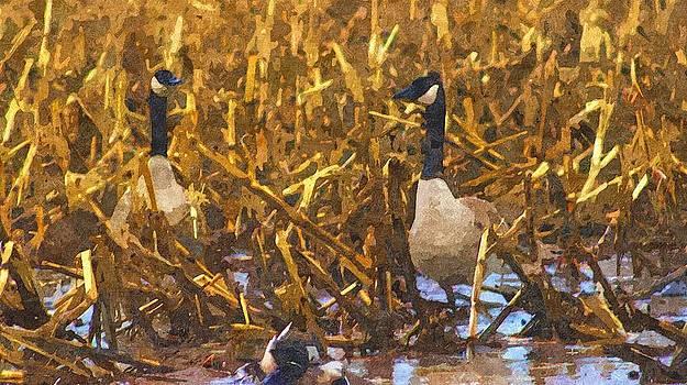 Rosemarie E Seppala - Canadian Geese Corn Field