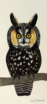 Canadian Long Eared Owl by Nicole I Hamilton