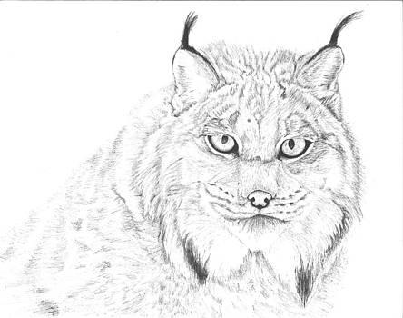 Canadian Lynx a.k.a. Samurai Cat by Reppard Powers