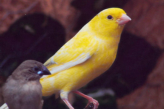 Barb Baker - Canary and Finch