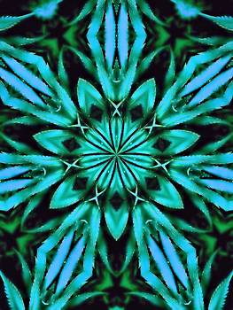 Cannaleidoscope 5 by David Munoz