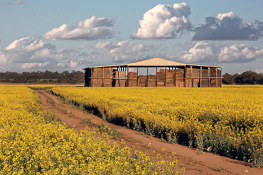Canola And Hay by Helen Akerstrom Photography