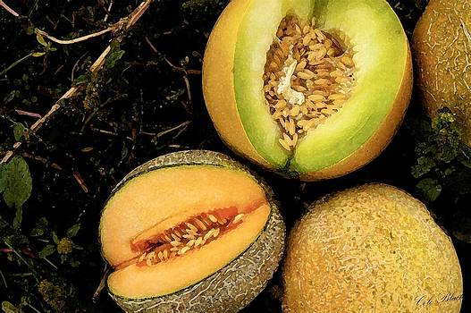Cantaloupe by Cole Black