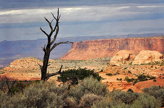 Marty Koch - Canyon Vista 2