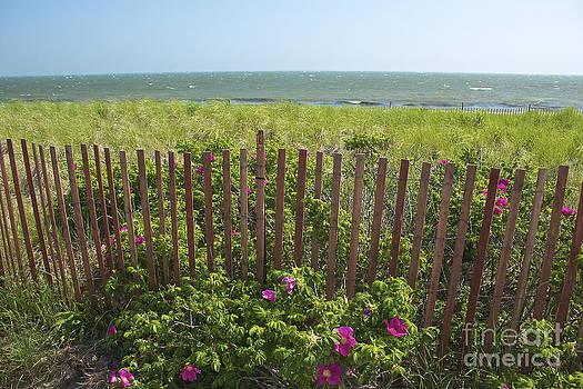 Amazing Jules - Cape Beach Fence