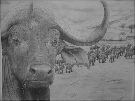Cape Buffelo by Casper Venter