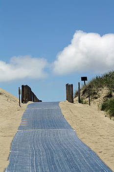 Cape Cod Beach Path by Terry Decker