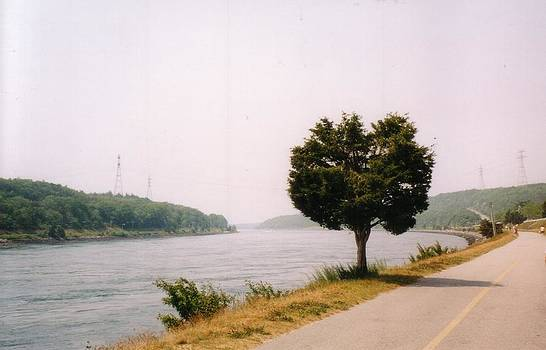 Cape Cod Canal and Tree by David Fiske
