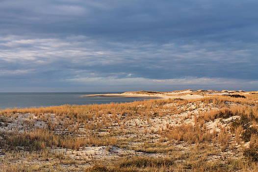 Cape Henlopen - Dunes by Francie Davis