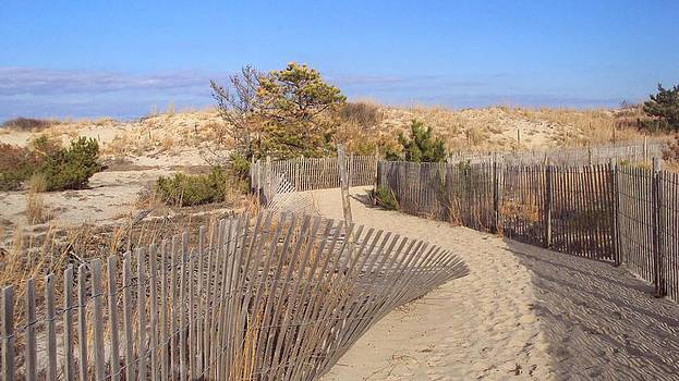 Cape Henlopen 2 by Cynthia Harvey