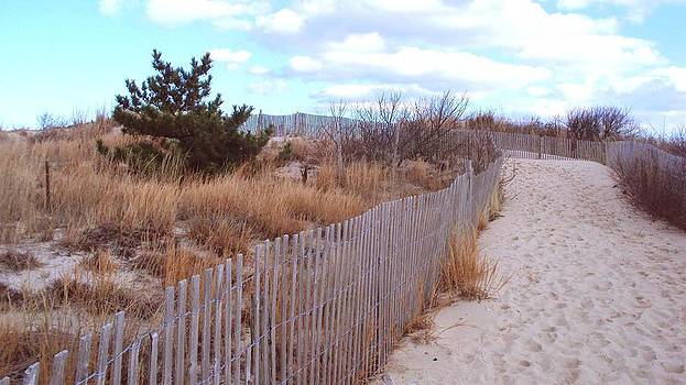 Cape Henlopen 6 by Cynthia Harvey