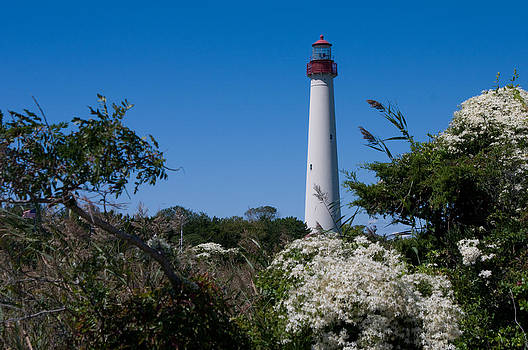 Cape May Lighthouse by Greg Graham