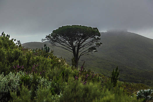Capetown 9822 by Larry Roberson