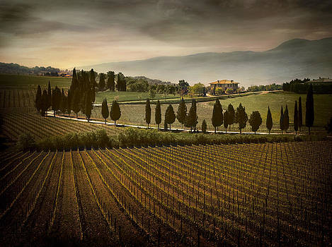 Capitoni Vineyard Estate Tuscany 2071522-131-002575 by Jimmy Williams
