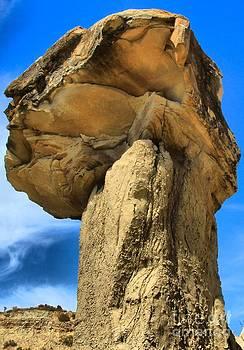 Adam Jewell - Caprock Mushroom