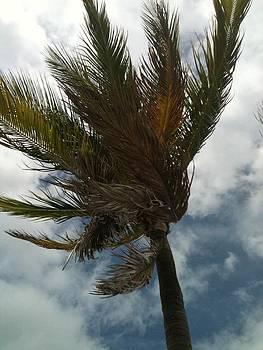 Captured Wind by Jillian ODwyer