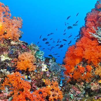 Captvating Coral by Paula Marie deBaleau