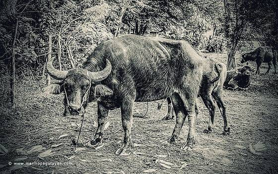 Carabao by Marino Pagulayan