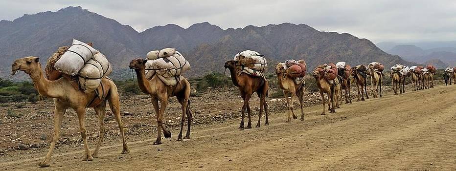 Caravan in the desert by Liudmila Di