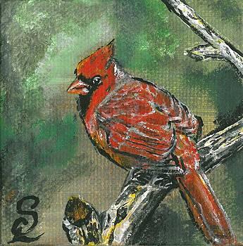 Cardinal 1 by Sarah Lowe