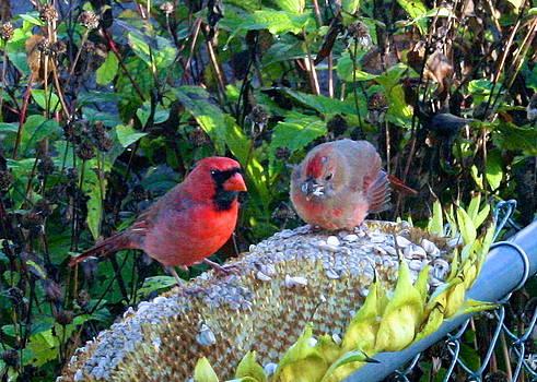 Cardinal and Fledgling by Melany Raubolt