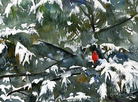 Cardinal and Pine by Hollis Machala