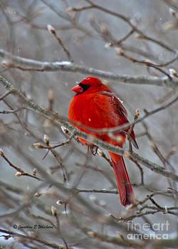 Cardinal Chill by Jonathan E Whichard