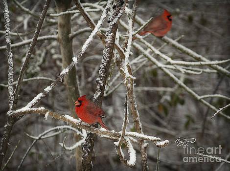 Cris Hayes - Cardinal Color Blast