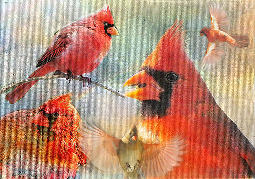 Cardinal Delights by Shannon Story