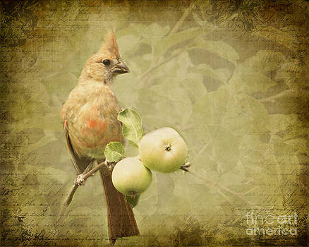 Cardinal in Apple Tree by Pam  Holdsworth