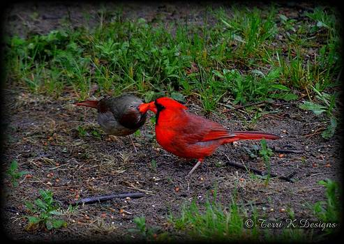 Cardinal kiss by Terri K Designs