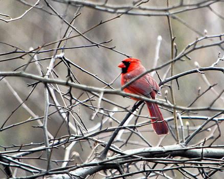 Leslie Cruz - Cardinal