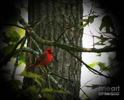 Cardinal Love.. by Jinx Farmer