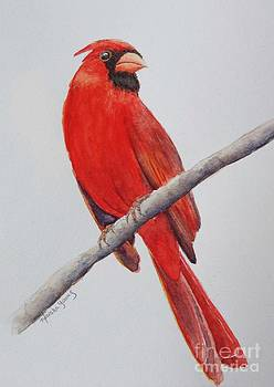 Cardinal by Marsha Young
