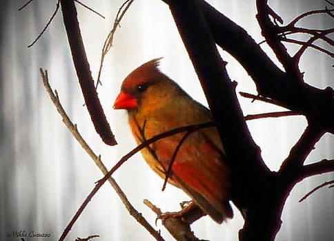 Cardinal by Mikki Cucuzzo