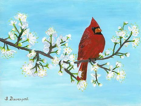 Cardinal on Apple Tree by Sara Davenport