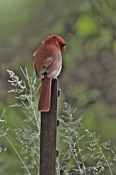 Cardinal on Post by Helen Ellis