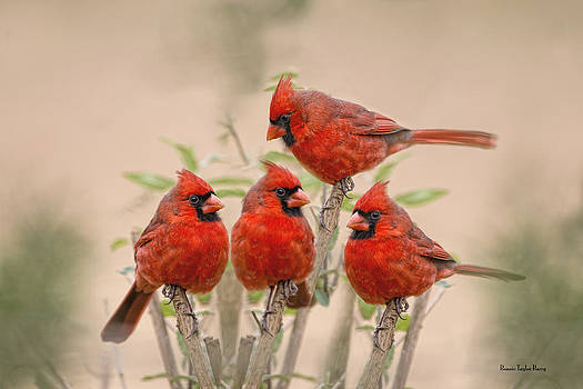 Cardinal Quartet by Bonnie Barry