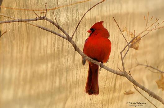 Randall Branham - Cardinal texture photoart