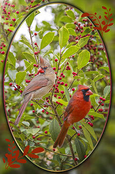 Cardinals in Holly by Bonnie Barry
