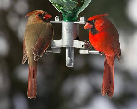 Cardinals by John Kunze