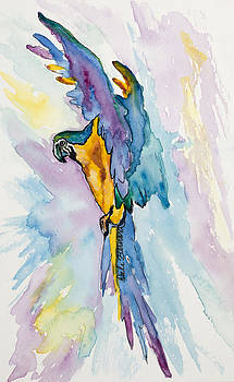 Caribbean Blue Macaw by Dale Bernard