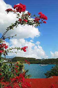 Ramunas Bruzas - Caribbean Flowers