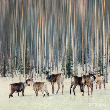 Caribou and tree bigger size by Priska Wettstein