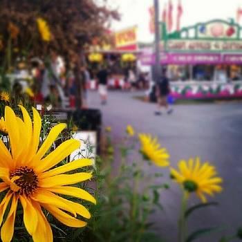 Carnival Flowers by Nick Hansen