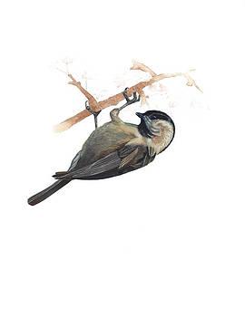 Carolina Chickadee by Rachel Root
