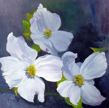 Carolina Dogwoods by Maureen Ghetia