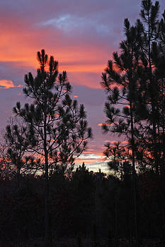 Carolina Sunset by Carolyn Stagger Cokley