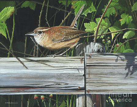 Carolina Wren by Mike Brown