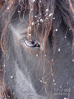 Carol's Winter Kiss by Lori Ann  Thwing